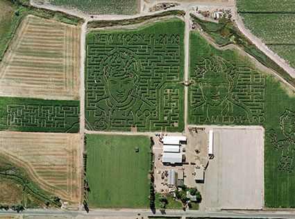 Twilight Corn Maze