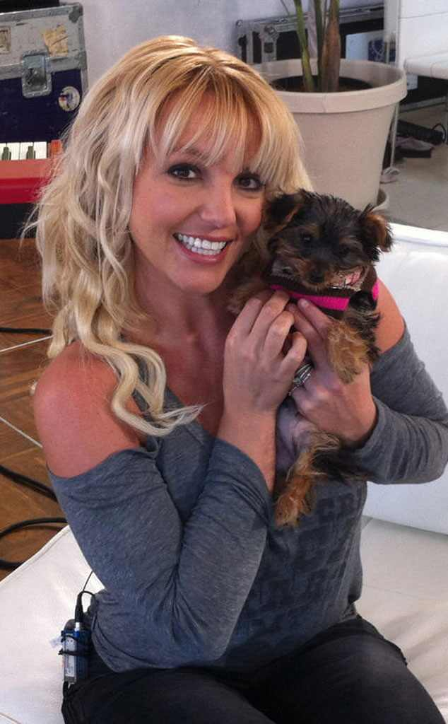 Britney Spears, Puppy, Twit Pic