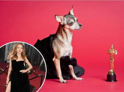 Haute Puppy, Angelina Jolie