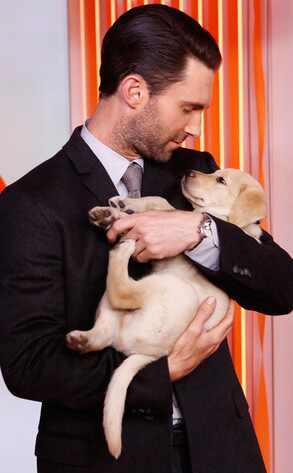 Adam Levine, Puppy