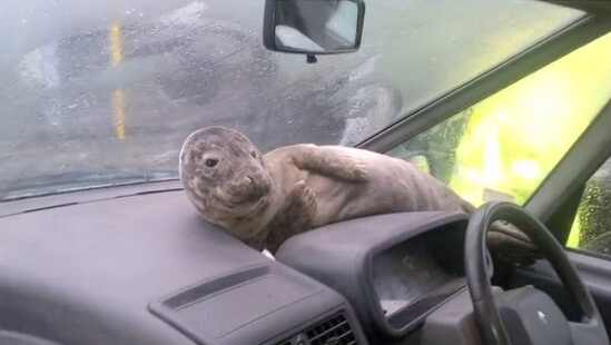 Chelsea Lately Seal
