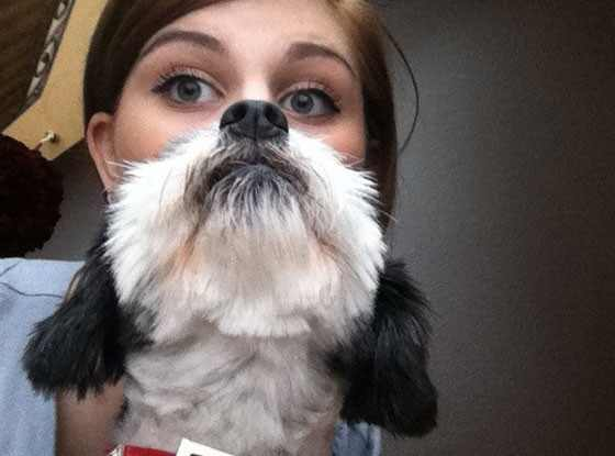 Dog Bearding