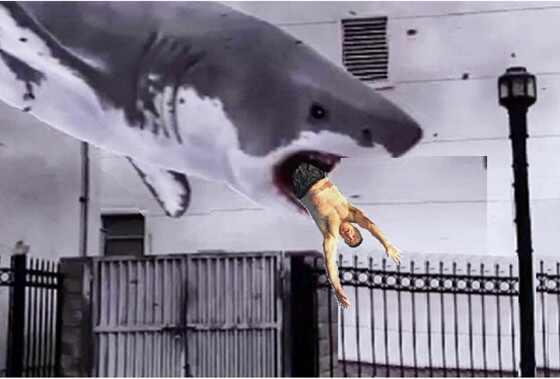 Alec Baldwin Photoshop Shark 4