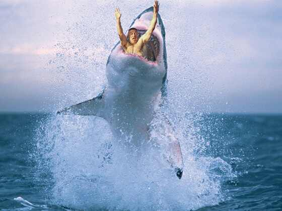 Alec Baldwin Photoshop Shark 3