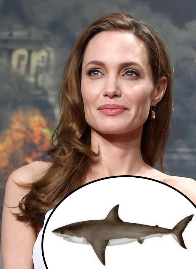 Angelina Jolie, Great White Shark