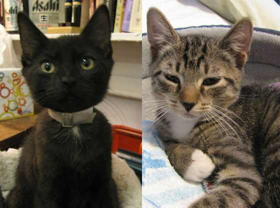 Subway Kittens