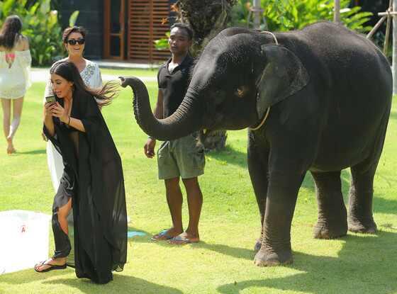 Kim Kardashian, Elephant