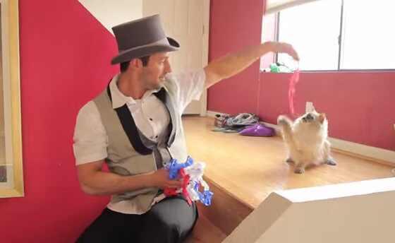 Gatos reagem a truques de magica