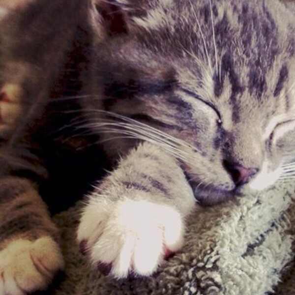 E!'s Cutest Cat, Bert Macklin
