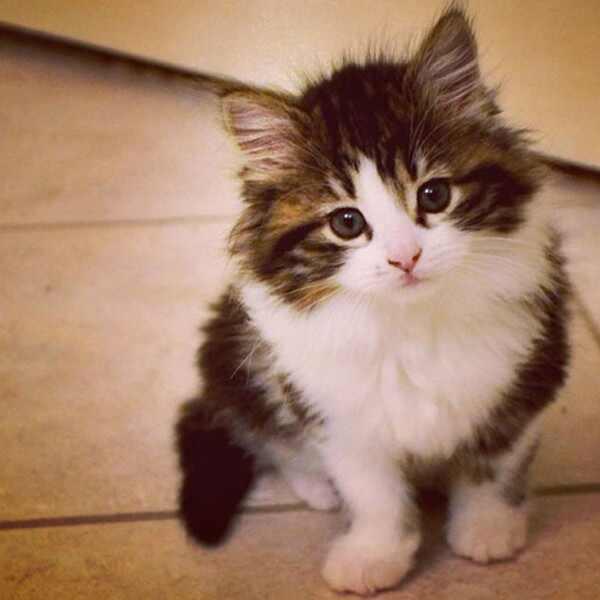E!'s Cutest Cat, Nonna