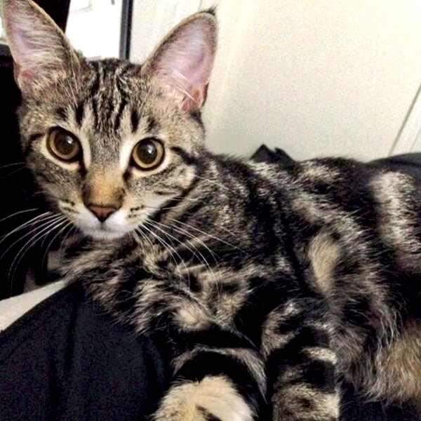 E!'s Cutest Cat, Eleanor