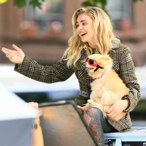 Chloe Grace Moretz, Puppy