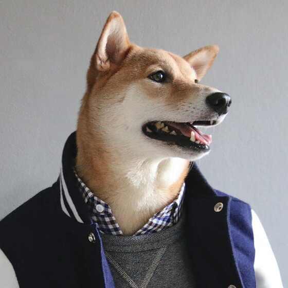 Cachorro estiloso
