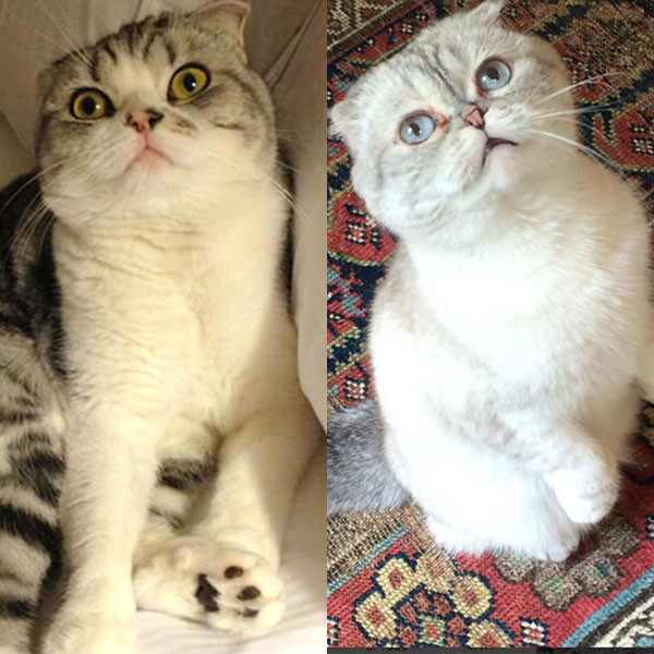 Pet Week, Taylor Swift, Olivia Benson, Meredith, Instagram, Cats