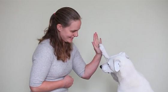 Cachorro surdo é adotado e aprende língua de sinais