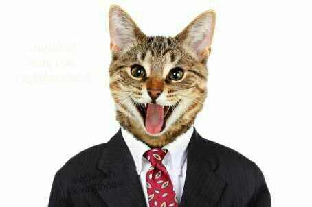 Fotos de animales de todo tipo incluyendo mascotas que más te gustan Rs_454x302-161003121830-gato1