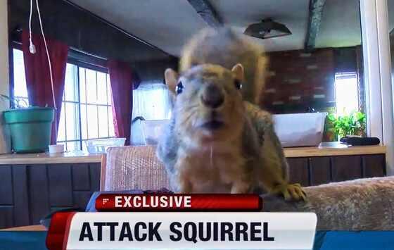 Esquilo de estimação impede roubo