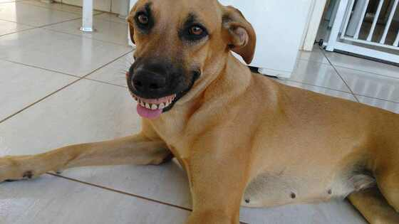 Cachorra dentadura
