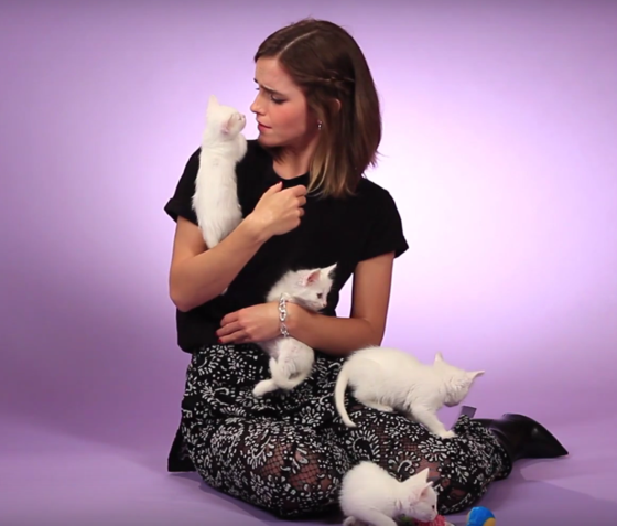 Emma Watson fue entrevistada en un set repleto de gatitos y el resultado es simplemente perfecto (+ Video)