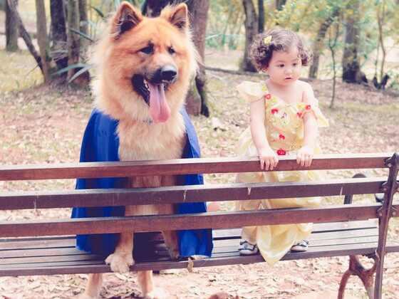 Menina e cachorro posam em ensaio fotográfico de A Bela e a Fera