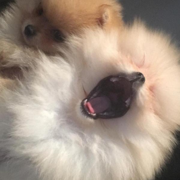 Los nuevos cachorros de North West y Penelope Disick son demasiado tiernos