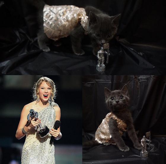 Gatos vestidos de Taylor Swift