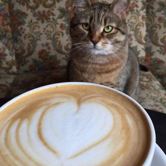 Polônia ganha casa de café com gatinhos
