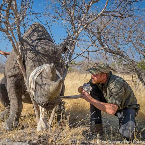 Prince Harry, Botswana