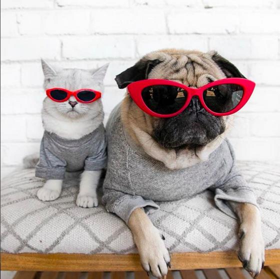 10 cuentas de Instagram que debes seguir si eres amante de los animales