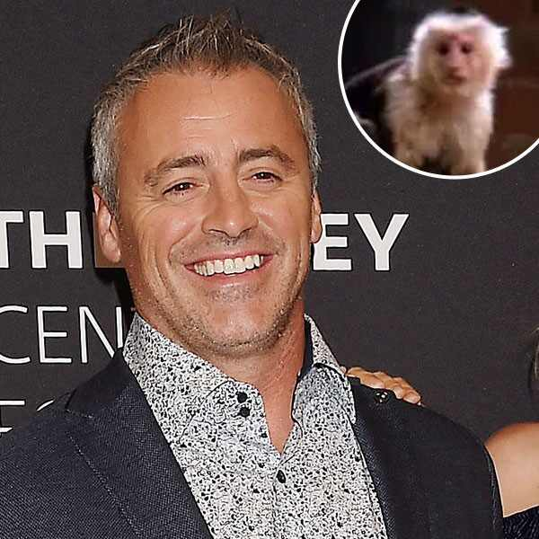 Matt Le Blanc, Marcel The Monkey, Inset