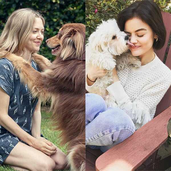E-Comm: Dog Friendly Hotels, Amanda Seyfried, Lucy Hale