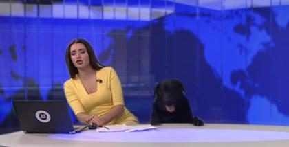 Cachorro interrompe telejornal ao vivo na Rússia