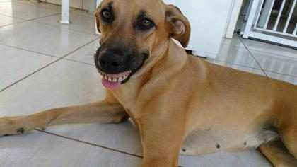 Cachorra acha dentadura, encaixa na boca e dono publica foto na web