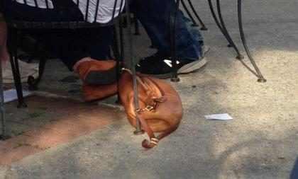 Mulher confunde bolsa com cachorro e viraliza na web