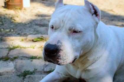 Un perrito se suicidó tras ser afectado por la pirotecnia