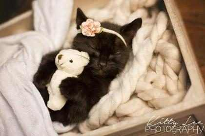 Fotógrafa faz ensaio de recém-nascido com gatinha