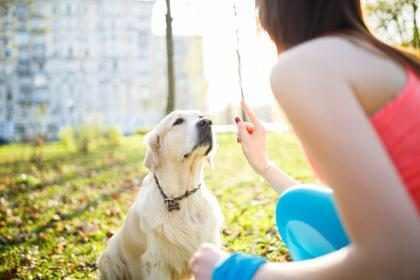 Para el nuevo ejercicio de moda solo necesitas la ayuda de tu mejor amigo… ¡Tu perro!