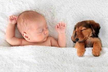 Tener una mascota cuando hay un recién nacido en casa… ¿Buena o mala idea?