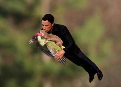 Foto de furão pegando carona em voo de pica-pau vira meme