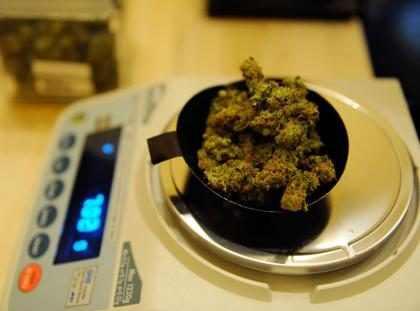 Chile permitirá el autocultivo de marihuana