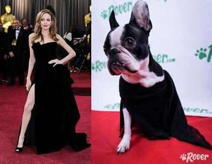 Cachorros reproduzem looks clássicos do tapete vermelho do Oscar