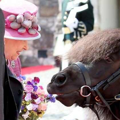 Rainha Elizabeth II repreende pônei por tentar comer suas flores