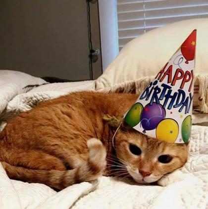 Família americana faz festa de debutante para gatinha de 15 anos