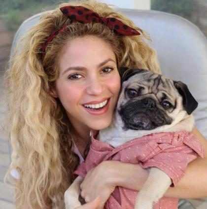 Todos los detalles de la delicada operación a la que se sometería Shakira para recuperar su voz
