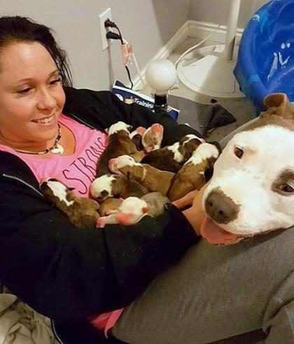 ¡Alerta de ternura extrema! Esta perra le entrega sus cachorros a su dueña para que los cuide como a ella (+ Video)